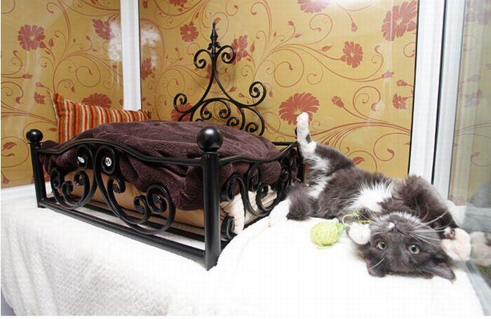 Luxury Cat Hotel in UK (14 pics)