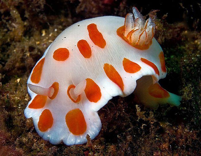 Beautiful Underwater Creatures (27 pics)