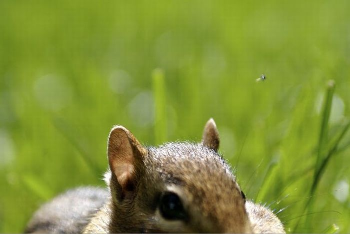 Cute Squirrels (47 pics)