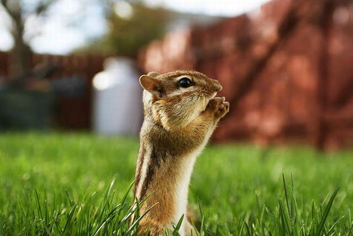 Cute Squirrels (47 pics)