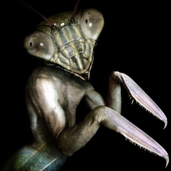 Scary Creatures of Francesco Sambo (8 pics)