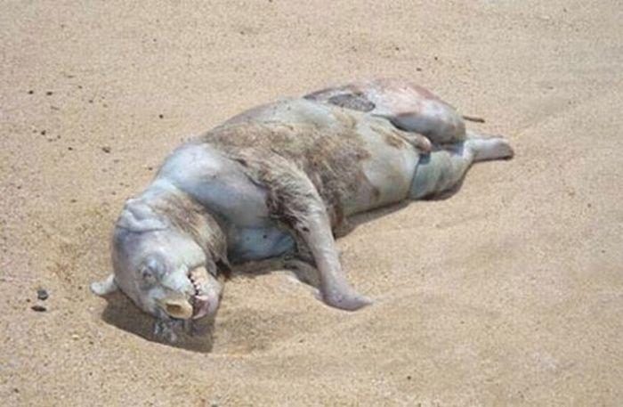 Weirdest Creatures Ever Found (17 pics)