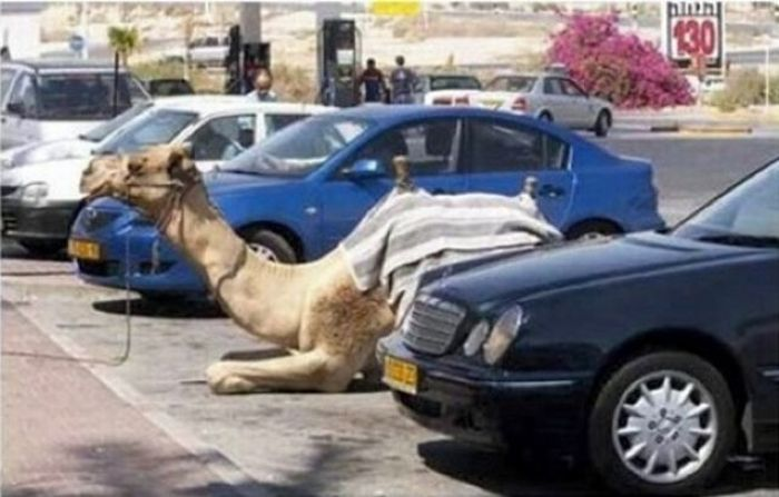 Parking Lot Disasters (55 pics)