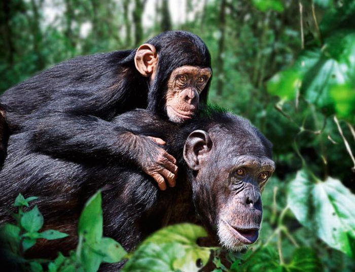 Animal Families (16 pics)