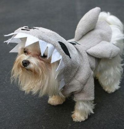 Cats and Dogs in Shark Costumes (23 pics)