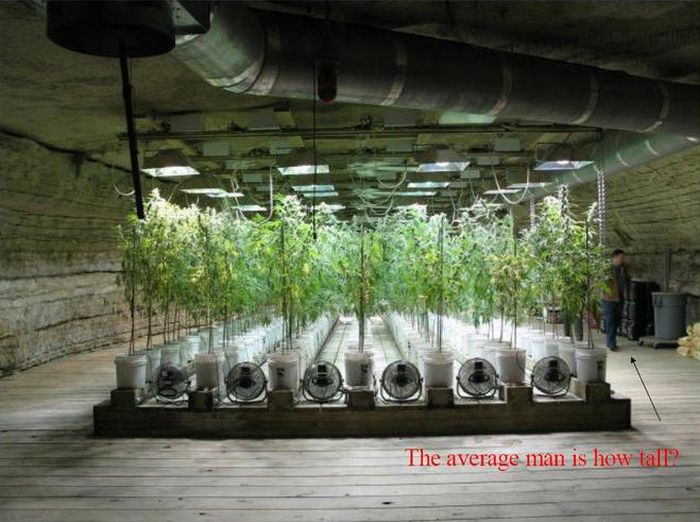 Most Elaborate Pot Growing Operation (13 pics)