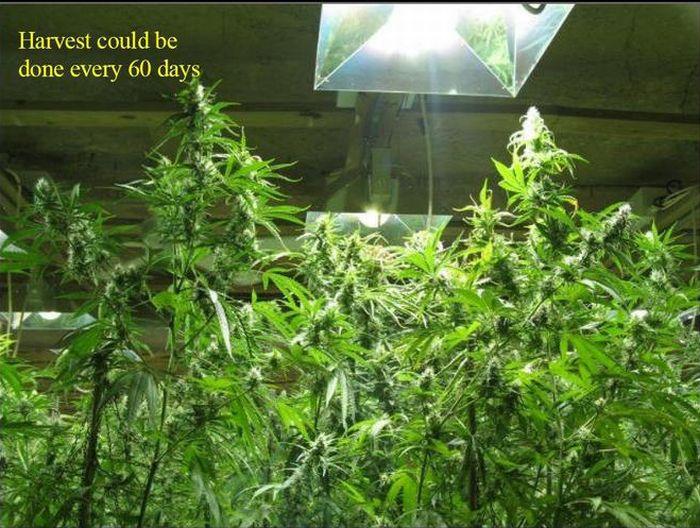 Most Elaborate Pot Growing Operation (13 pics)