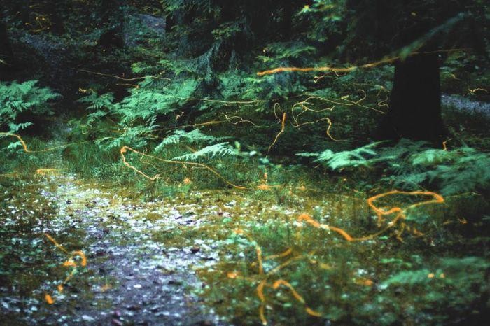 Fireflies (21 pics)