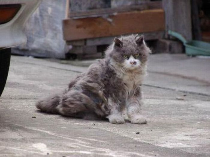 Angry Cat (6 pics)