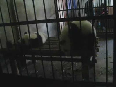 Funny Panda Escape