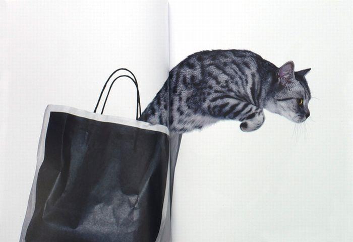 Cat Capers (82 pics)