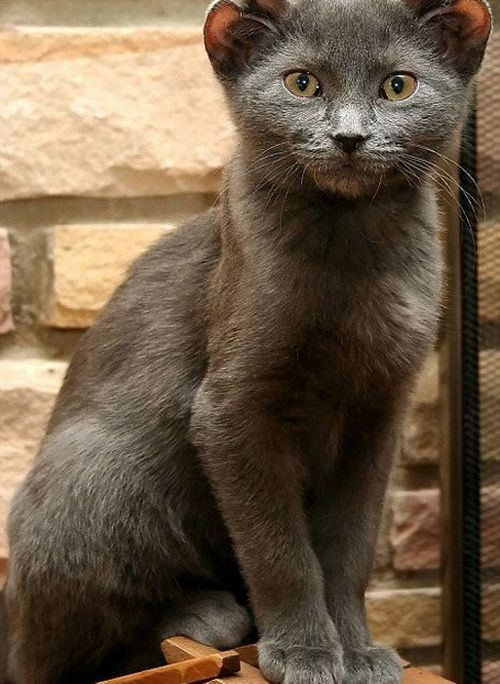 Kitten with Four Ears (7 pics)