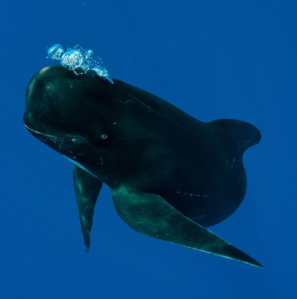 Smiling Whales (9 pics)