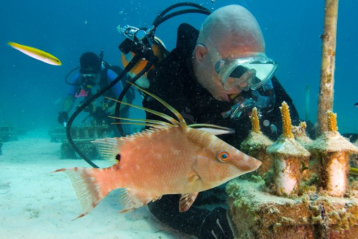 Volunteers Grow Coral Reefs (13 pics)