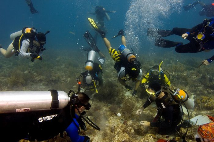 Volunteers Grow Coral Reefs (13 pics)