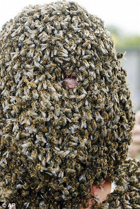The Best Bee Beard Competition (6 pics)