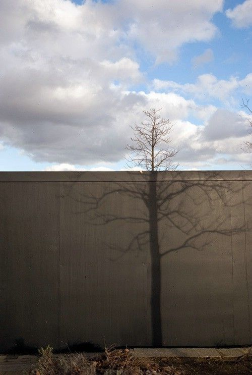 Living Shadows (17 pics)