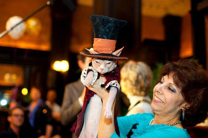 Cat Fashion Show (35 pics)
