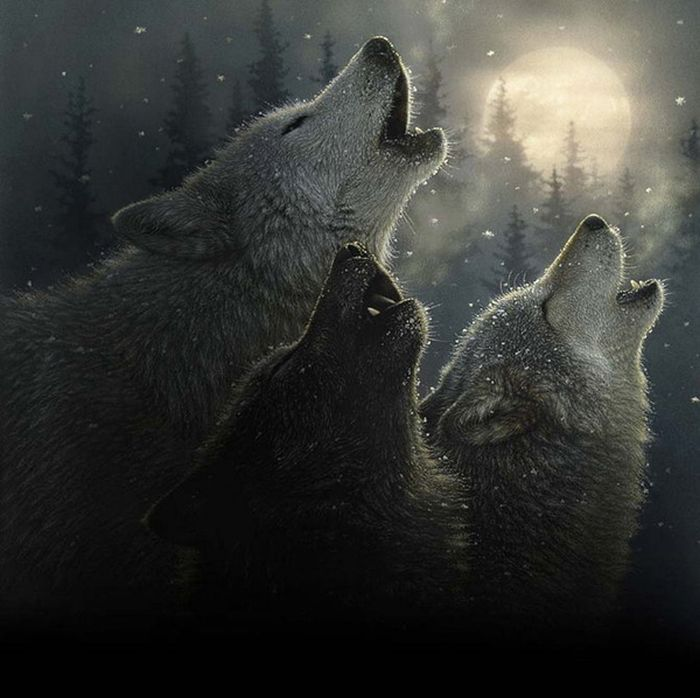 Wolf Beautiful_wildlife_paintings_06