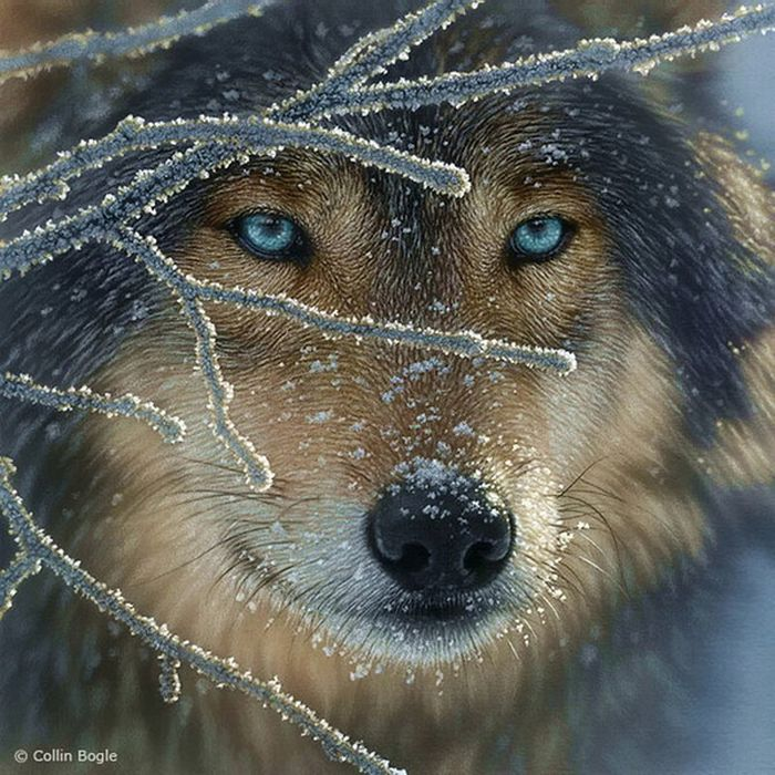 Wolf Beautiful_wildlife_paintings_09