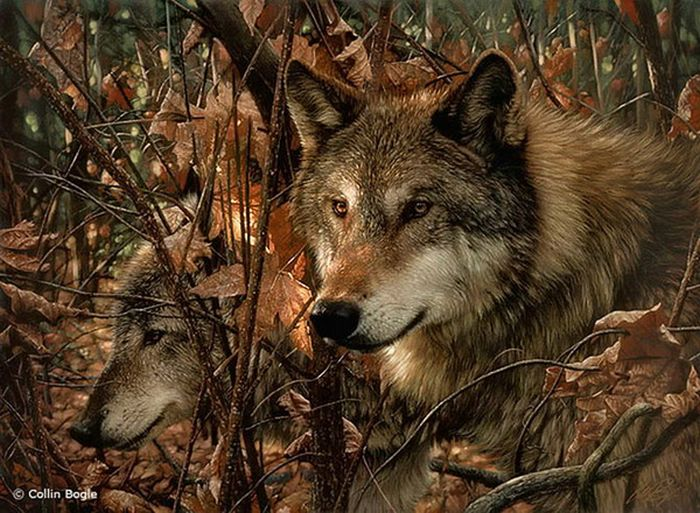 Wolf Beautiful_wildlife_paintings_11