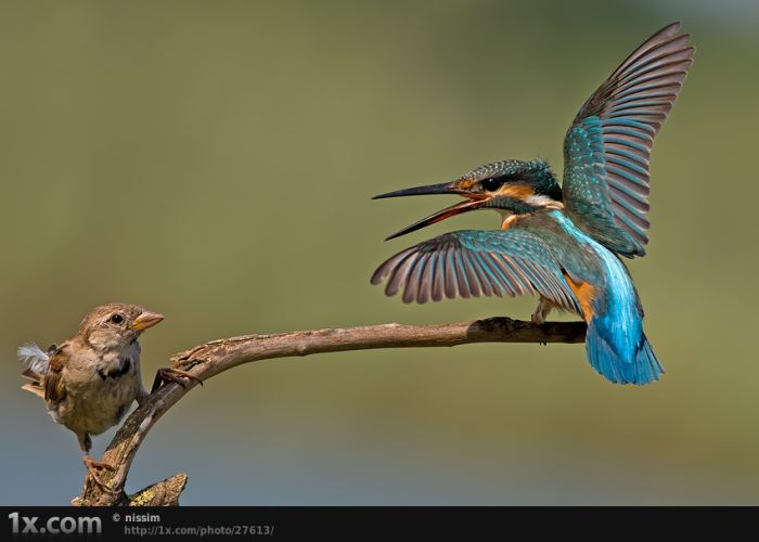Beautiful Examples of Bird Photography (41 pics)
