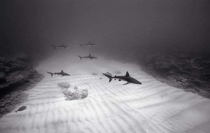 Black and White Underwater Photos (72 pics)