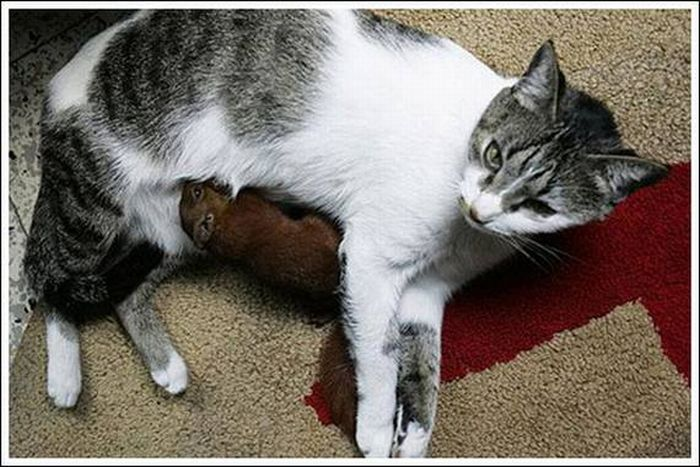 Cats Play With a Squirrel (10 pics)