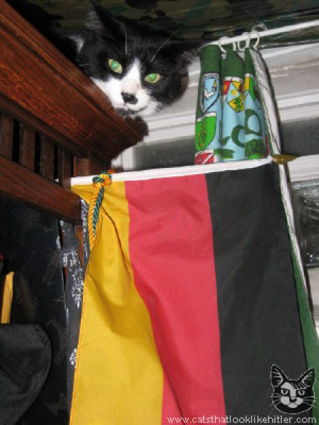 Cats That Look Like Hitler (39 pics)
