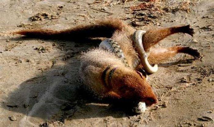 When Animal Fight (21 pics)