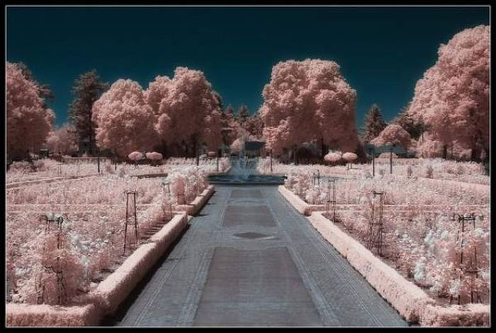 Breathtaking Infrared Photos. Part 2 (41 pics)