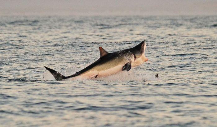 Sharks (27 pics)