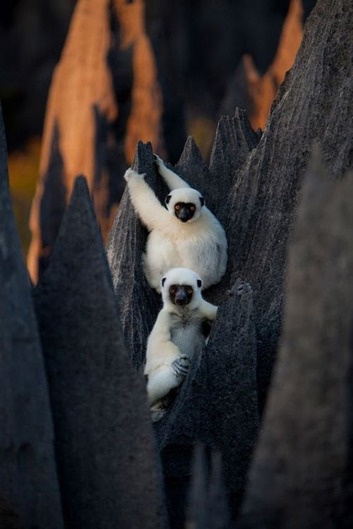 The Stone Forest of Madagascar (19 pics)