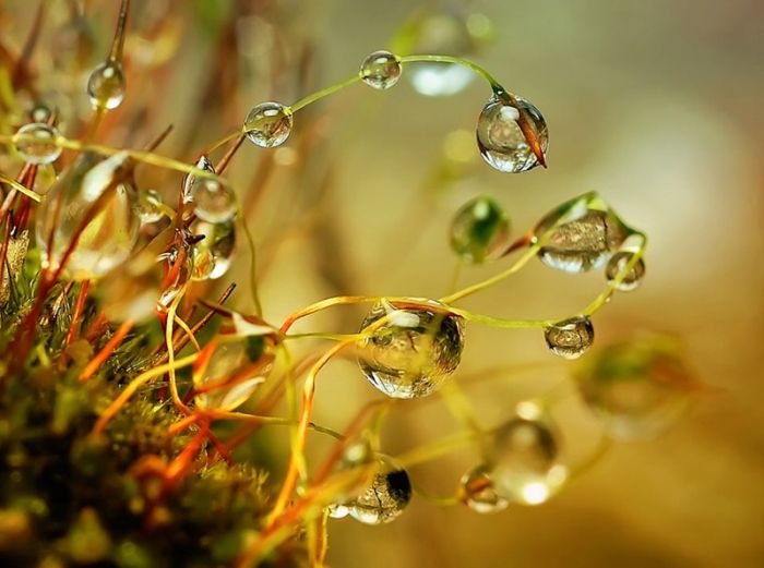 Magical Waterdrops (13 pics)