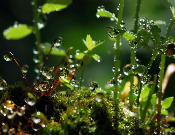 Magical Waterdrops (13 pics)