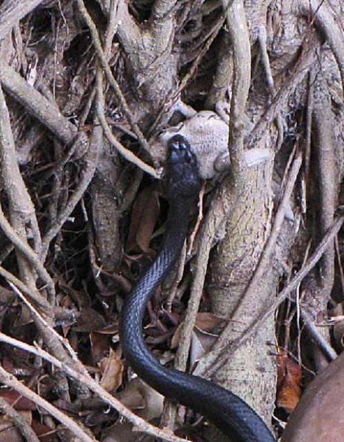 Toad Escapes a Snake (29 pics)