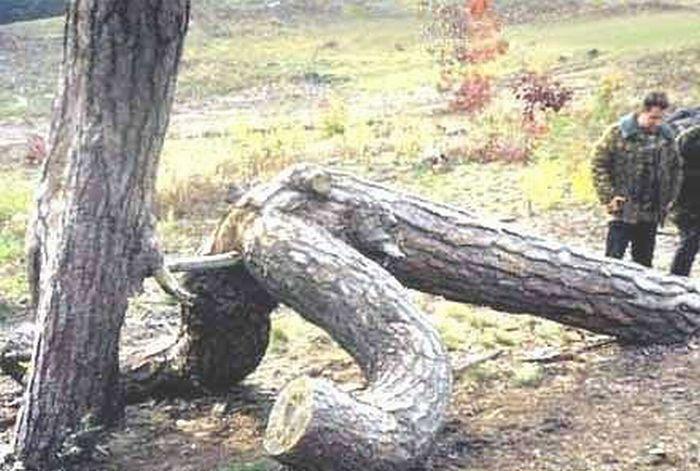 Tree Porn (12 pics)