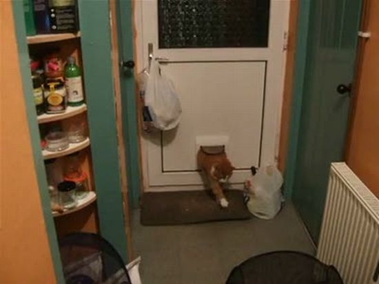Fat Cat Comes Through Catflap