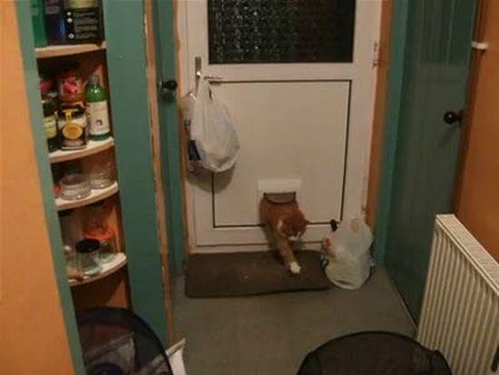 Fat Cat Comes Through Catflap