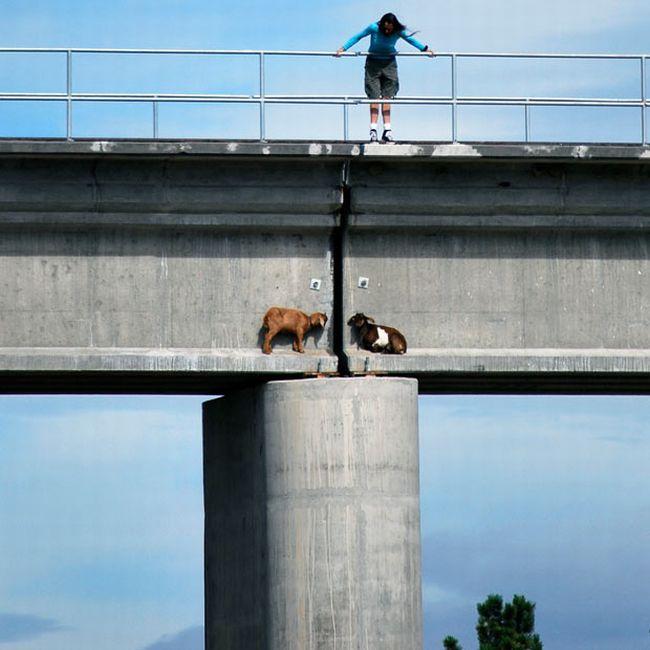 Who is That on the Bridge? (3 pics)
