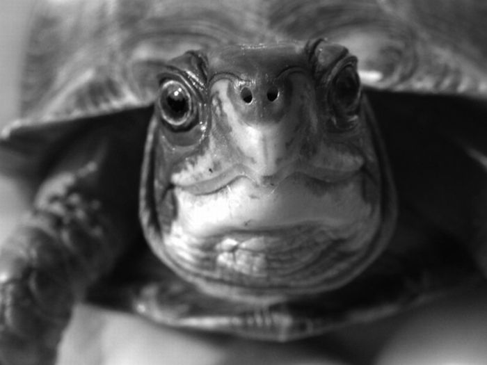 Emotion Faces by Turtles (10 pics)