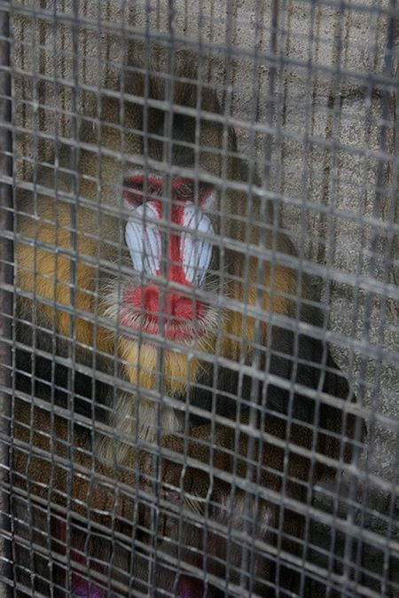 Rooftop Zoo in Bangkok (31 pics)