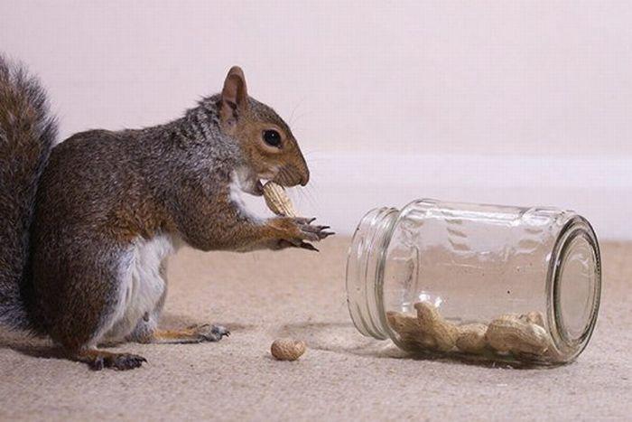 Squirrel and a Cat (6 pics)