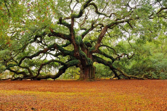 Amazing Photos of Nature (68 pics)