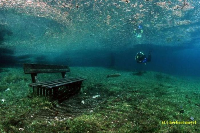 Beautiful Underwater Meadow (28 pics + 1 video)