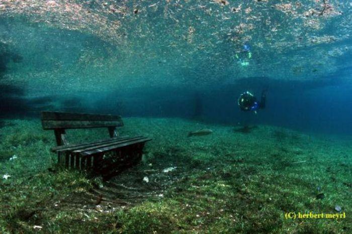 Beautiful Underwater Meadow (28 pics + 1 video)