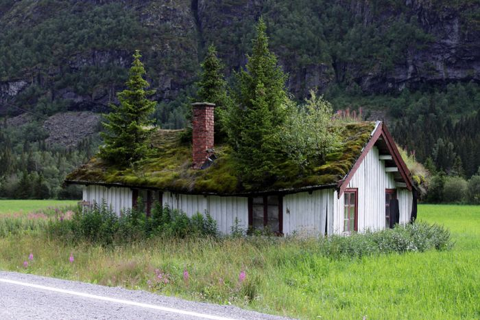 Roofs in Norway (12 pics)