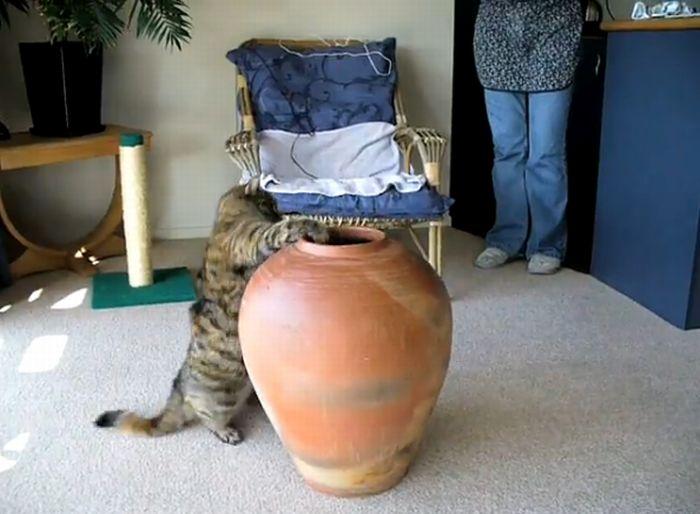 Fat Cat in a Pot (2 Attempts)