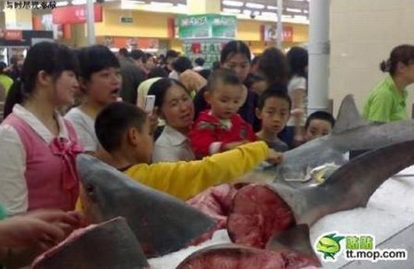 Fish Market in China (3 pics)