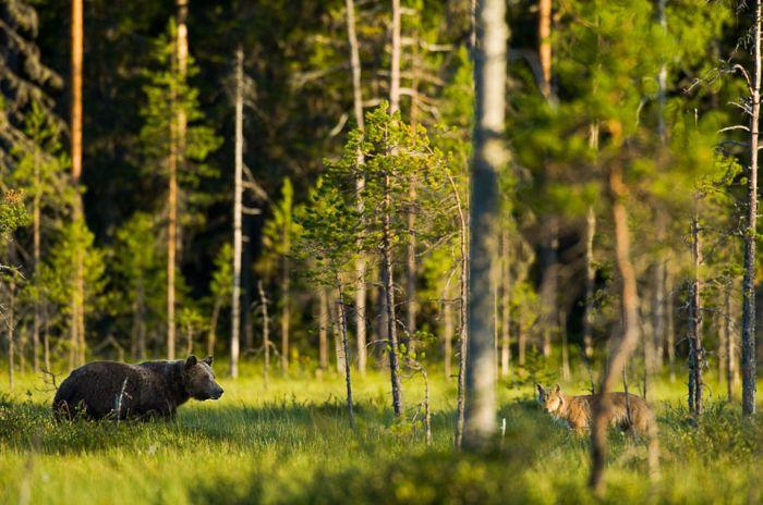 Wild Life Photography (25 pics)